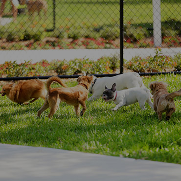 Large Dog Park at Orchard Place Apartments