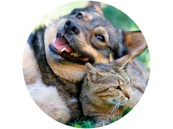 Pet Friendly Apartments in Nampa